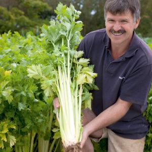 Skutki uboczne i przeciwwskazania nasion selera